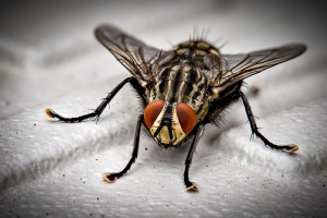 Insect Control, Pest Control in Poplar, Isle of Dogs, Millwall, E14. Call Now 020 8166 9746